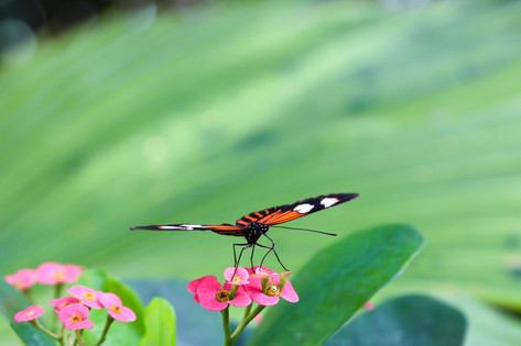 KW Butterfly House