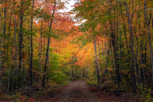 Fall Vibes, Michigan's Upper Peninsula