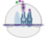 ribosome1.png
