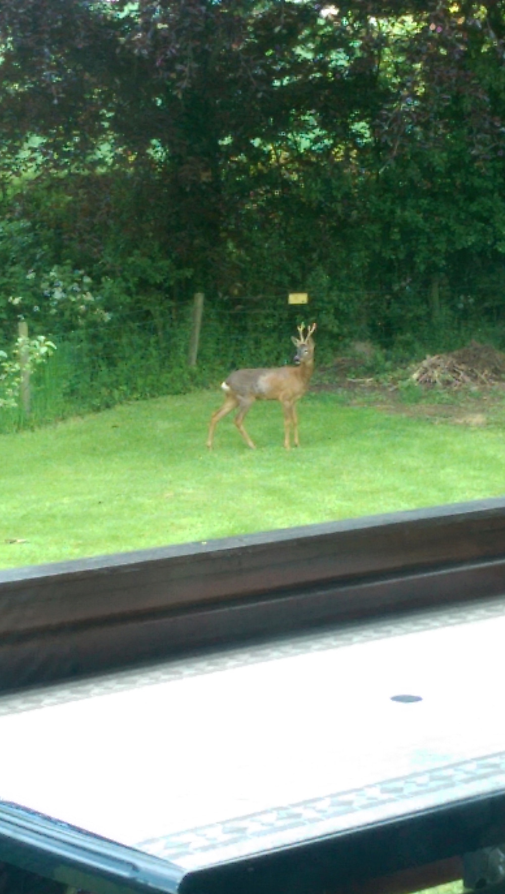 log cabin visited by a deer