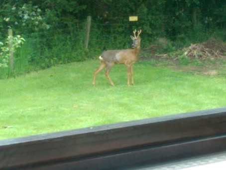 Have you seen our deer?!