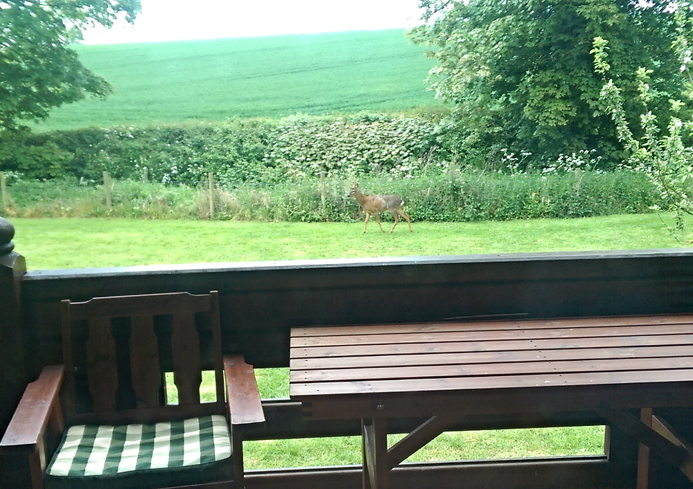 Deer on holiday