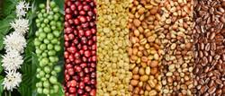 Coffee beans_edited