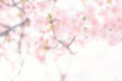 cherry-blossom-tree-overlay.png