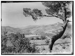 صورة لقلعة عجلون