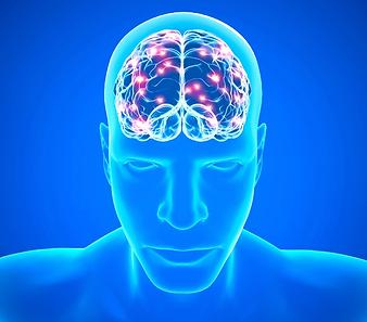 Hörtherapie-Synapsen.png