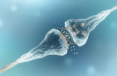 Synapsen-im-Gehirn-Hörtherapie.png