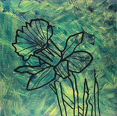 Daffodil Contour