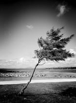 l'arbre de poste lafayette