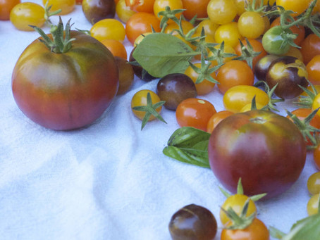 Heirloom Tomato Soup (dairy free)