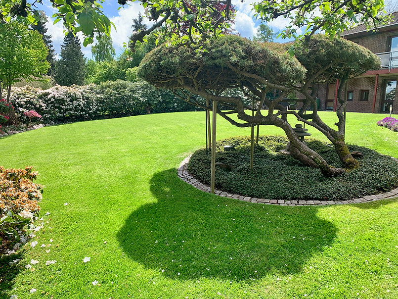 Anlægsgartner Gardene Græsplæne