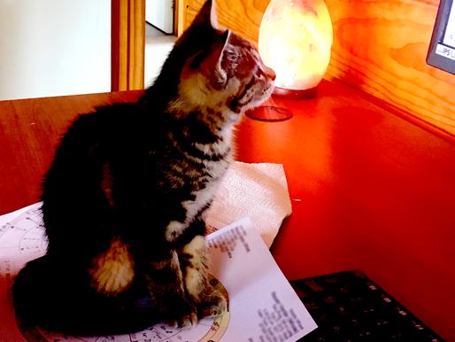Kitty-scope