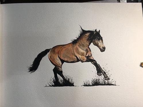 Horse no.1