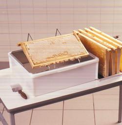 """Wabe verdeckelt - Honig ist """"reif"""""""