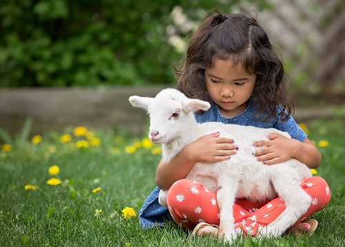 little girl and lamb photo.jpg