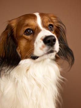 Jak správně vyfotit psa!