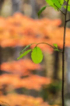 Green leaf with orange bokeh