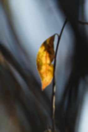 Yellow leaf with bokeh