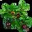 Thumbnail: Grosses boucles d'oreilles créoles en tamarin et goyaviers