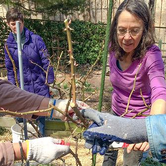 clg rose workshop 1.jpg