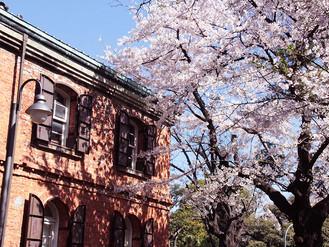 東京藝術大学〜桜も満開〜