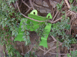 02_ A Tree Frog