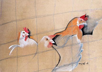 תרנגולים, 2003