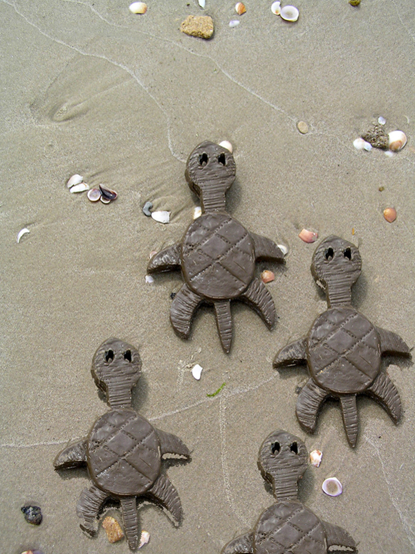 06_ 75 Baby Turtles