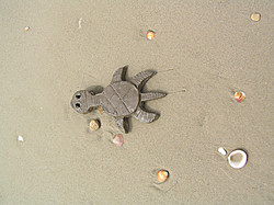 06_ A Baby Turtle