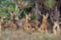 Животный мир - Маврикий - www.deluxe-mauritius.com