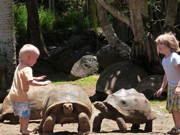Черепахи Маврикий - www.deluxe-mauritius.com