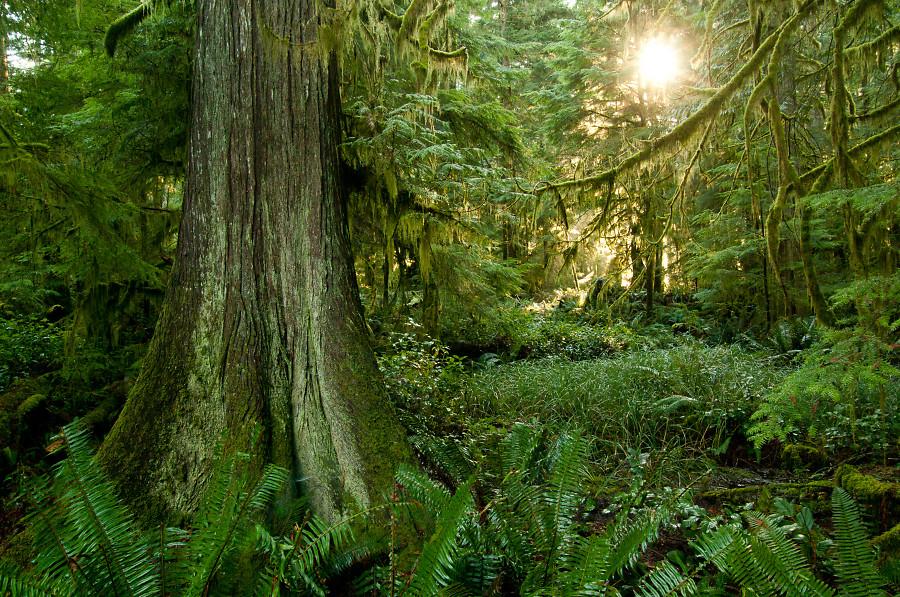 forest-photo-1278.jpg