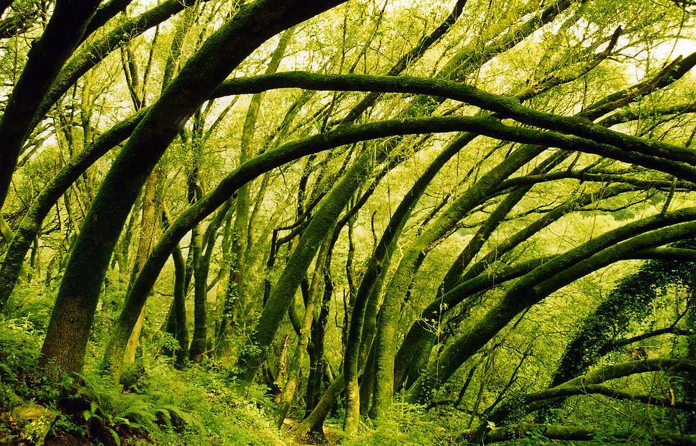Mt Tam Moss.jpg