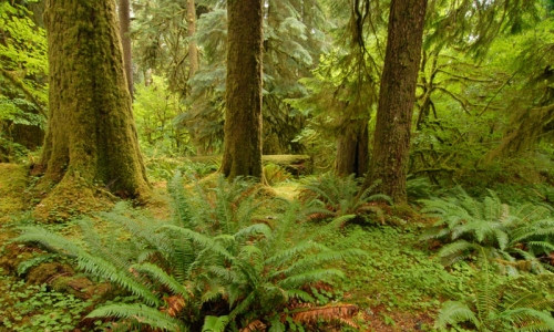 Hoh_Rainforest_Hikes_md.jpg