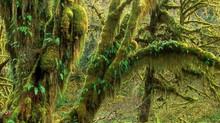 Forest Gateways Through Wonder Walks, Cougar Eyes, & Plant Hums