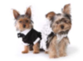 gravata borboleta roupas para cachorro