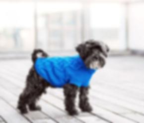 Tenis dog star roupas para cachorro