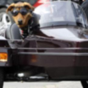 oculos de sol roupas para cachorro