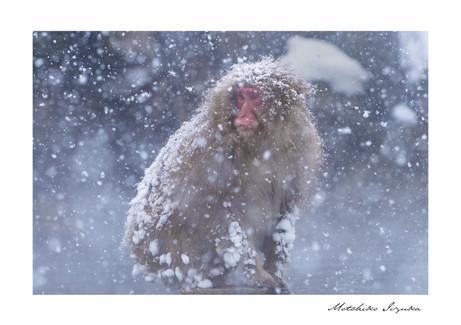 gallery_animal_02.jpg