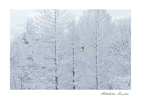 gallery_animal_10.jpg