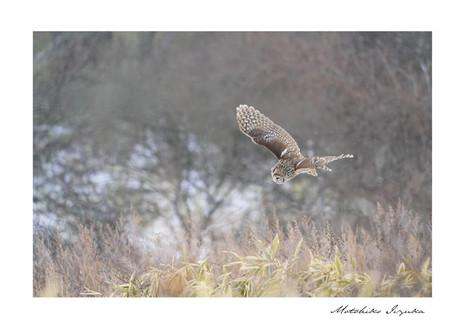 gallery_animal_03.jpg