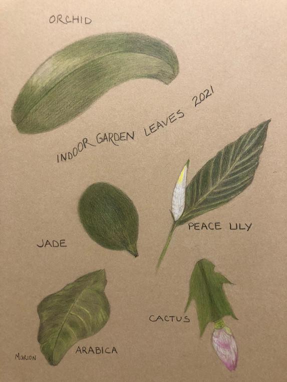 29. Indoor Garden Leaves 2021