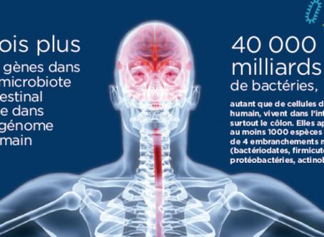 Intestin : un véritable cerveau