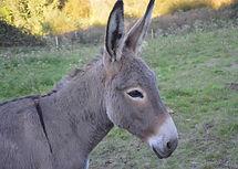 donkey-2761528_1280.jpg
