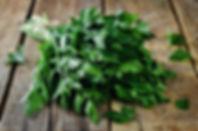 schnittlauch, petersilie, heilpflanze, heilpflanze, pflanzenheilkunde, homöopathisch