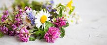 Heilpflanzen, Phytotherapie