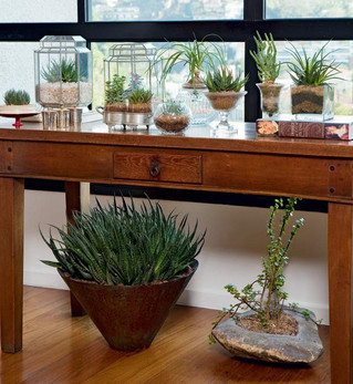 10 plantas para cultivar dentro de casa