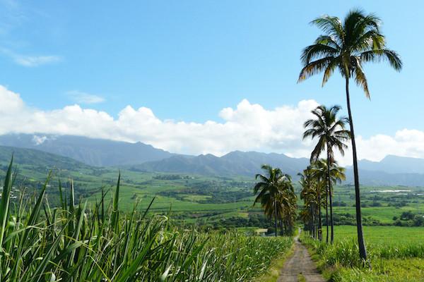 Rencontre mystique à la Réunion