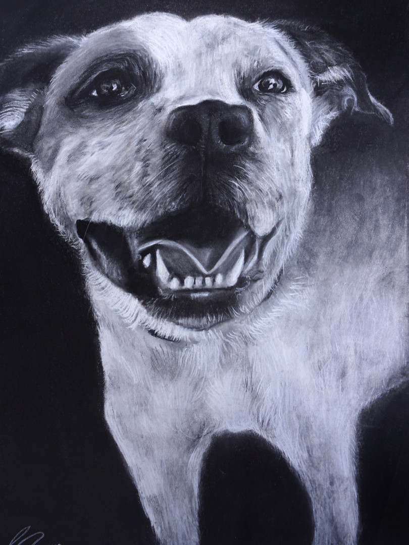 Dog Drawing Commission art