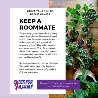 Keep a houseplant roommate